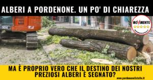 Read more about the article ALBERI A PORDENONE. UN PO' DI CHIAREZZA (ATTENZIONE, POST LUNGO)